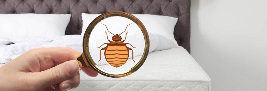 Présence des punaises de lit